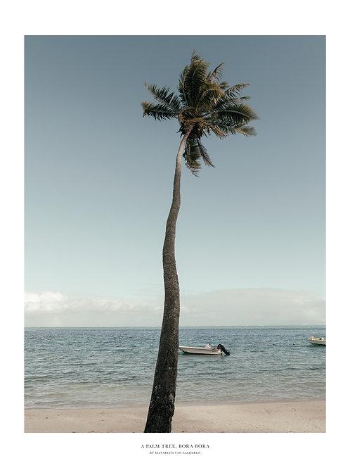 Palm Tree, Bora Bora