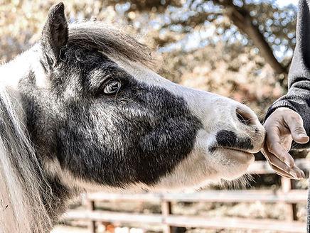 paardencoaching foto: Naomi Waalkens