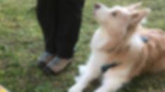 Rally Obedience bei Hundum Happy