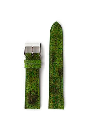 Green Wolffish
