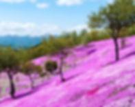 芝ざくら滝上公園2.jpg