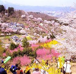 福島花見山公園.jpg
