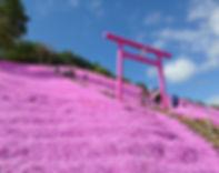東藻琴芝櫻公園3.jpg