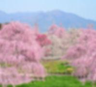 三重鈴鹿之森庭園.jpg