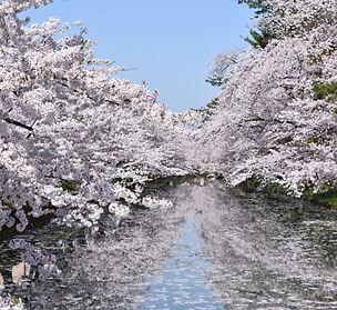 弘前城公園.jpg