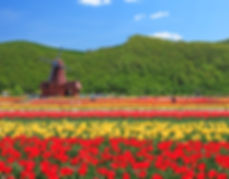 上湧別鬱金香花園2.jpg