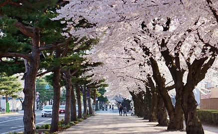 青森十和田官廳街.jpg
