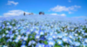 常陸海濱2.jpg