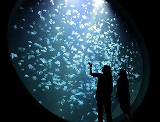 加茂水母水族館.jpg