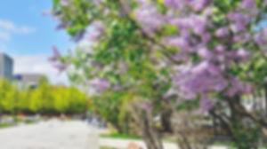 大通公園紫丁香祭2.jpg