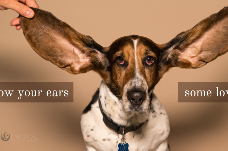 Show Your Ears Some Love