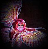 Baby Owl In Flight