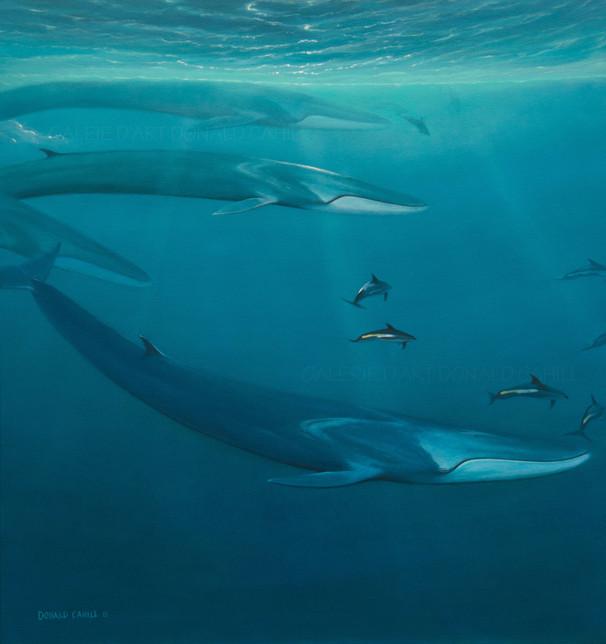 ''Baleines et dauphins''