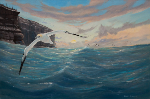''Bonaventure Island''