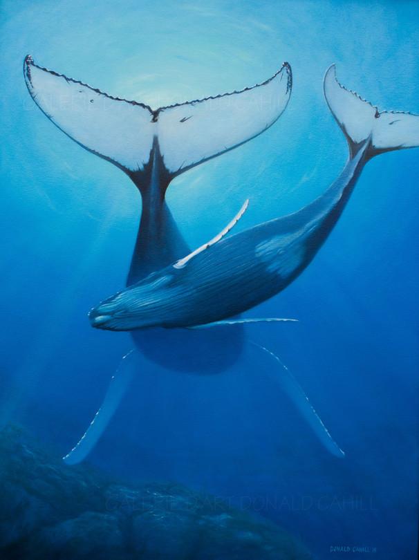 ''Baleines à bosse''