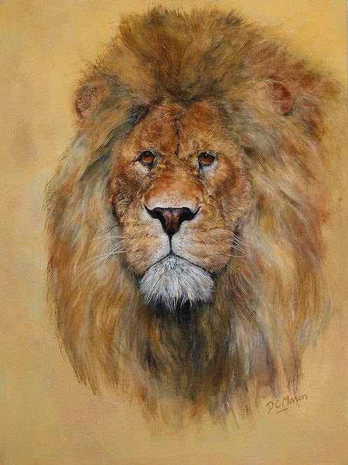 Lion, Signed Giclée Print