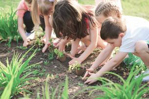 group planting in ground.jpg