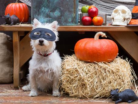 Not-So-Spooky Pet Halloween Costume Ideas