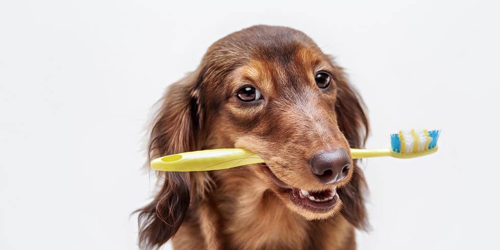 Dental Health At Home