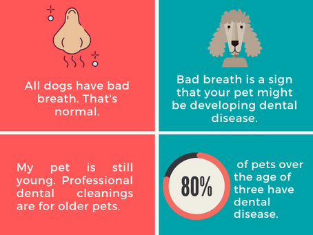 Myths and Facts: Pet Dental Health