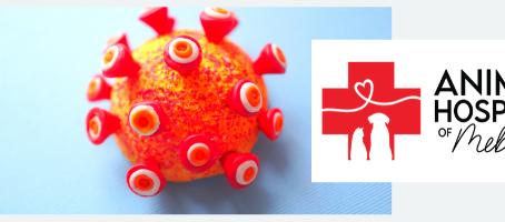 Updated Coronavirus Protocols (June 2020)