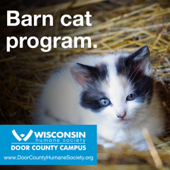 DCHS Barn Cat Program