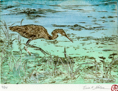 Blue Heron Fishing Along the Shore