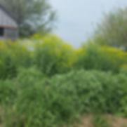 garden rows.jpg