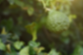 Medicinal Plants | Sacred Nature