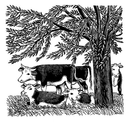 'Cows under Willow' greetings cards (pack of 5)