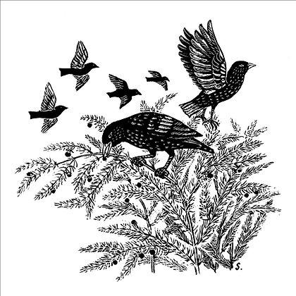 'Starlings' greetings cards ( pack of 5)
