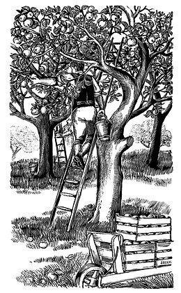 'Apple Picking' print