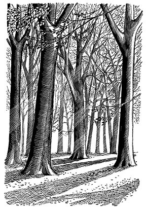 'Beech Trees' print