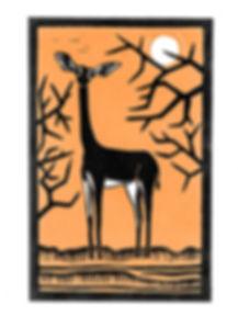 Gerenuk - 2000px.jpg