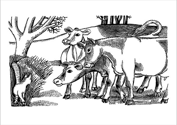 'Inquisitive Cows' greetings cards (pack of 5)