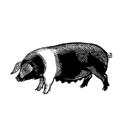 'Pig' greetings cards (pack of 5)