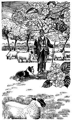 'Shepherd' print