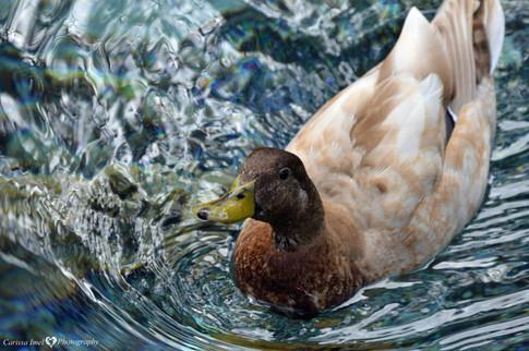 Got-Any-Quackers