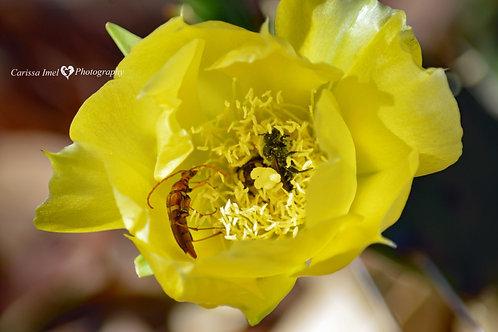 Pollen Perile