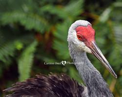 Carissa Imel - Don't Ruffle My Feathers!