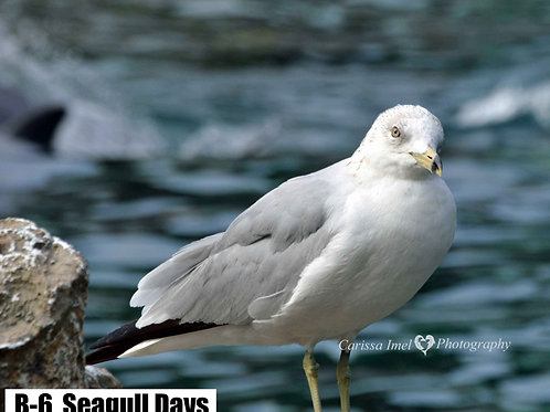 Seagull Days