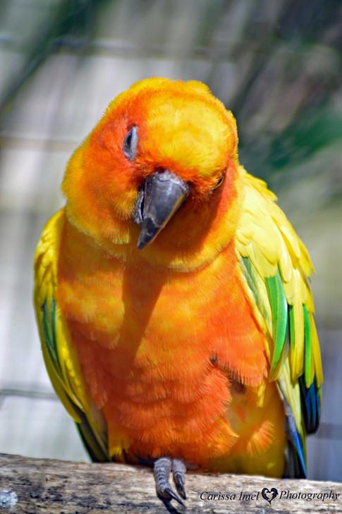 I'm-a-Pretty-Bird