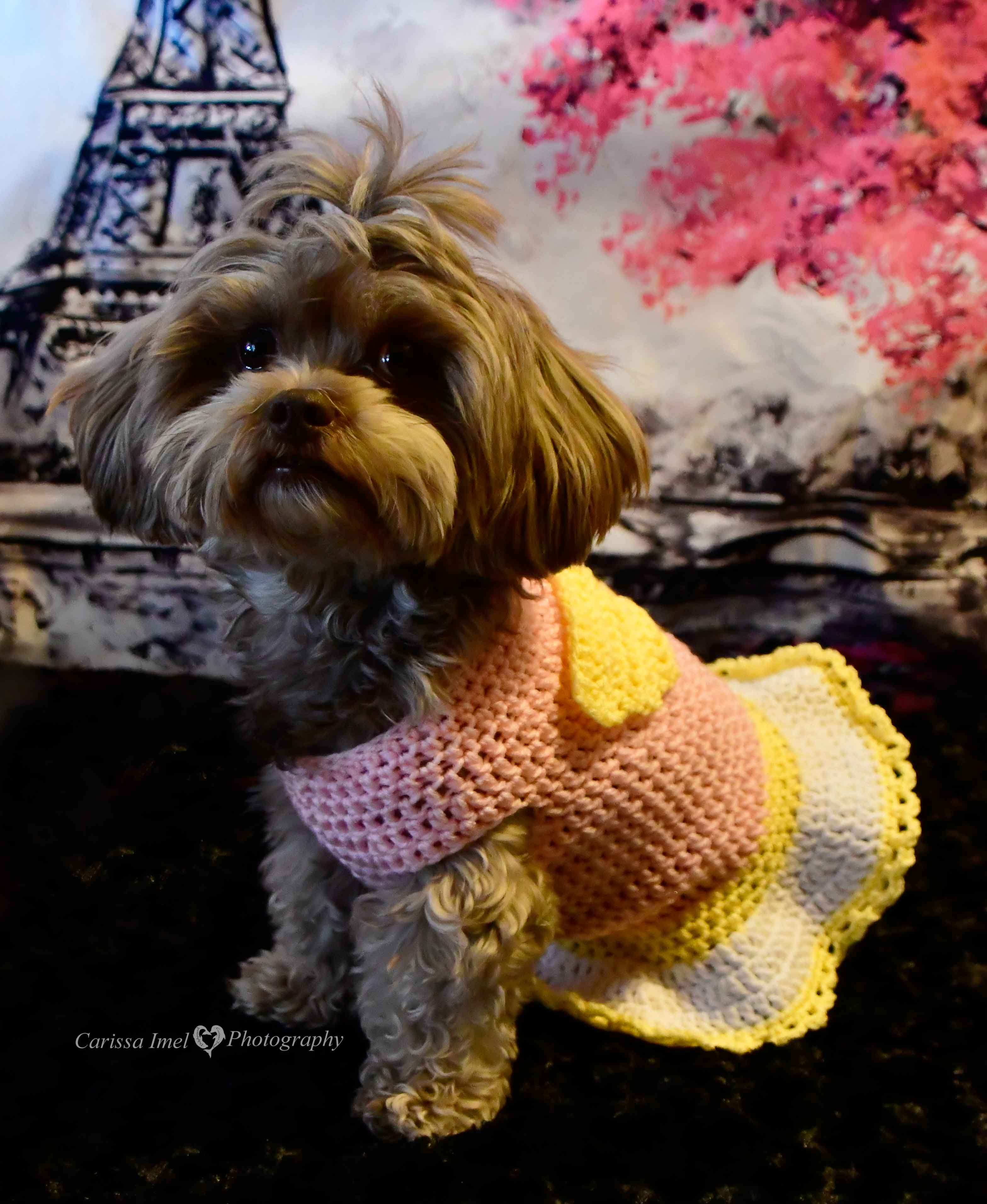 Angel Cherub Dog Sweater Dress