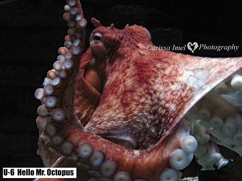 Hello Mr. Octopus