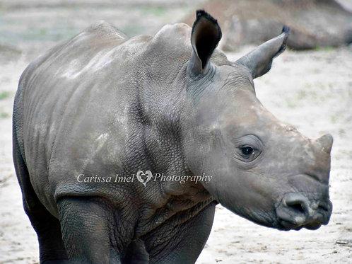 Rhino You Want Me!