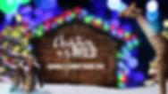 zootampa christmas.jpg