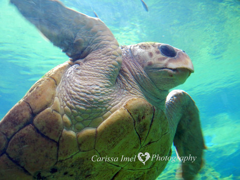 Turtle-Really-Close