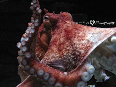 Hello-Mr.-Octopus