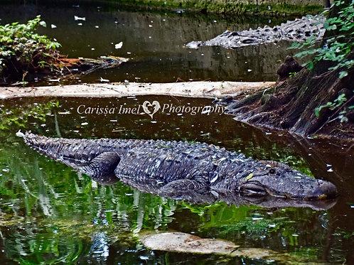 Navi-gator tour guides!