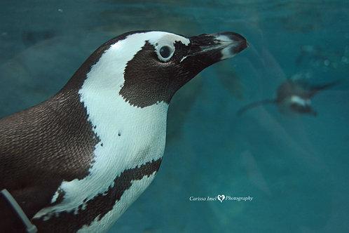 Hello Mr. Penguin